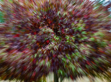 Seasons by Ann Kilpatrick