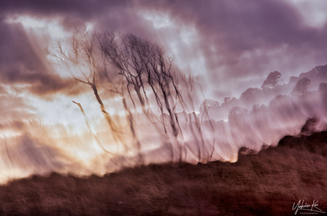 ICM in the Dunes by Carole Garside