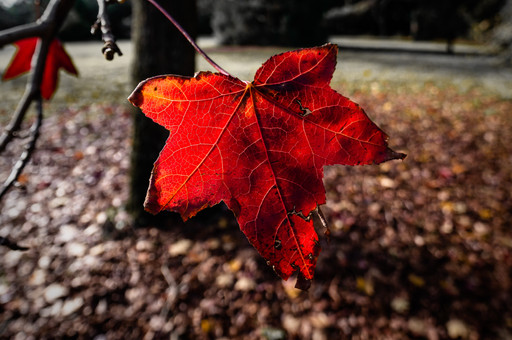 Exploring Autumn