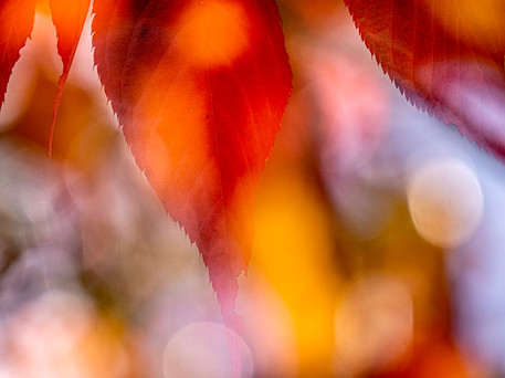 BBC Bold Bokeh with colour! by Mary Livingston
