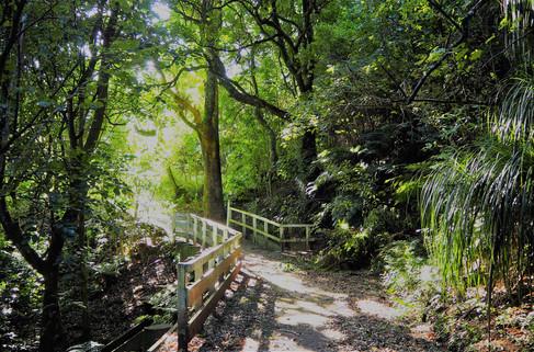 Bushview walk by Lynda Newman