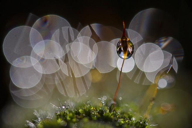 moss seed 1