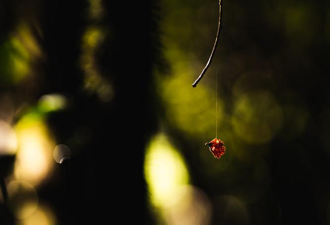 A tiny falling leaf by Paul Belli