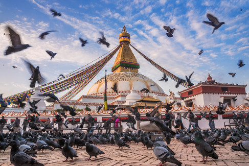Feathered pilgrims by Peter Laurenson