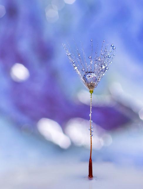 Blue Diamonds by Anita Ruggle