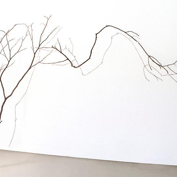 Desenho, 2016. Instalação de galho e linha. 163x180x57cm