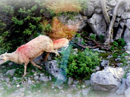 GITA DEL GUSTO: SULLE OMBRE DEL MITO