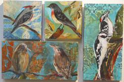 Bird Collage  - 1