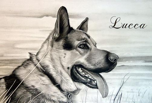 Shepherd Portrait.jpg