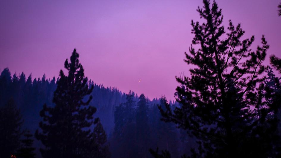 Lavender Night