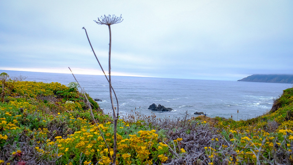 Wild flowers on the cliff