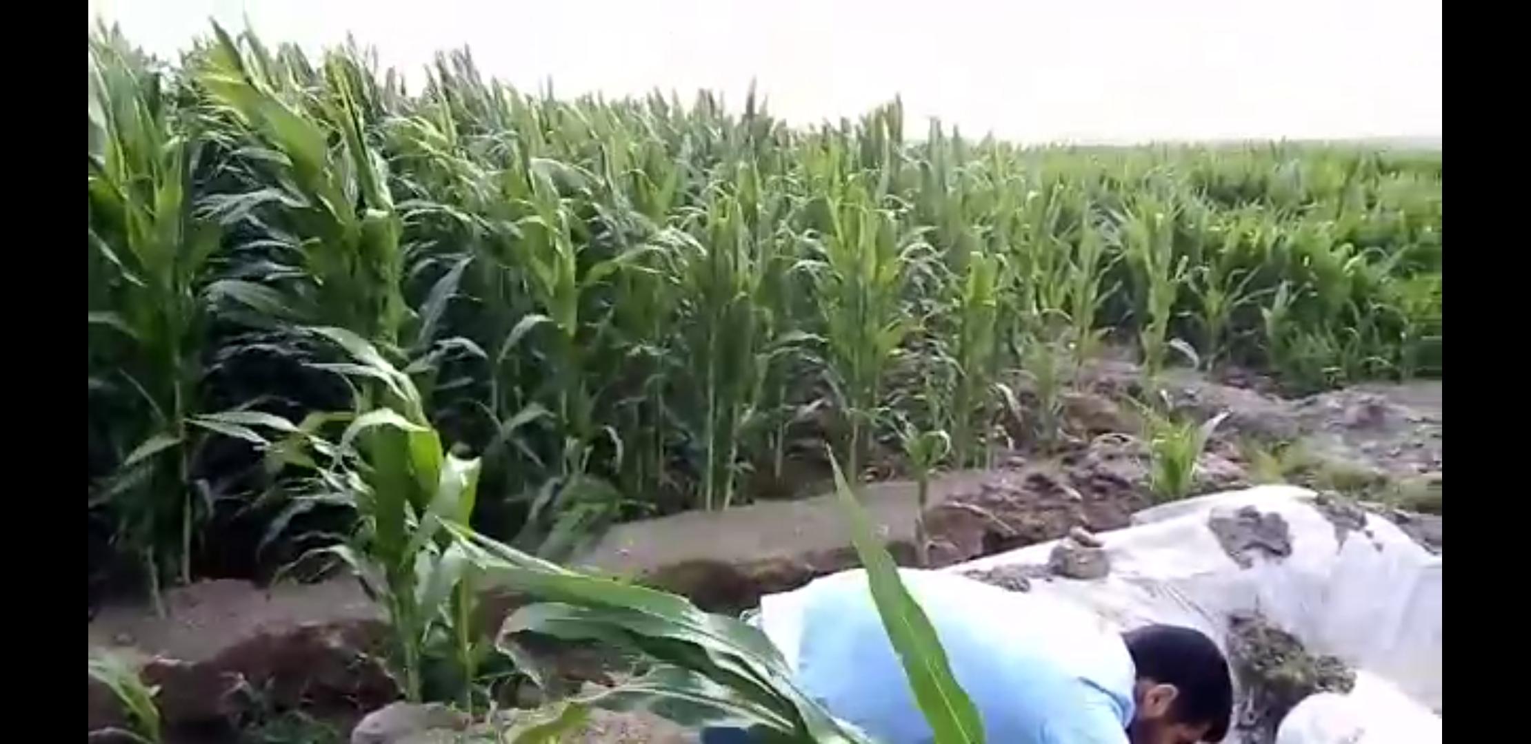 batman mısır (2).jpg