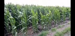 batman mısır (1).jpg
