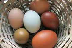 yumurta farkı.jpg