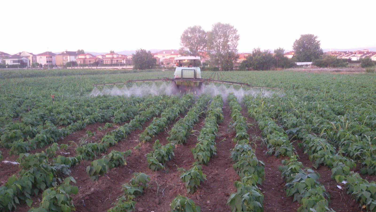 bursa domates fasulye armut vs uygulamal