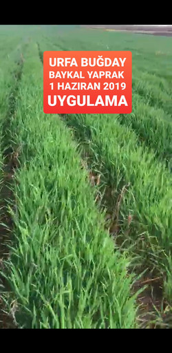 urfa mercimek üzüm buğday (1).jpg