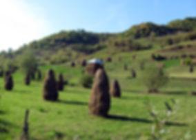 Maramures Landscape, Romania