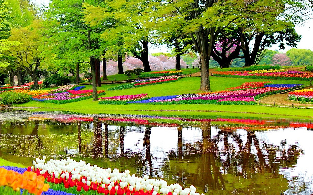 Choose a river for your tulip cruise