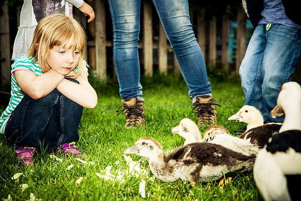 Tiergestützte Pädagogik mit Nutztieren