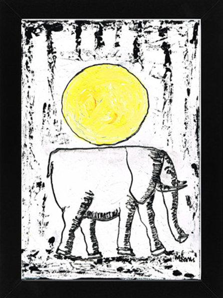 Elephant 502