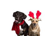 tan-and-black-dogs-3361692_edited.png