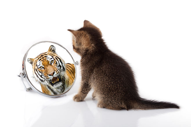 kitten with mirror on white background.