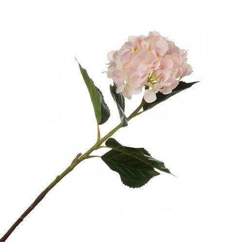 Гортензия нежно-розовая