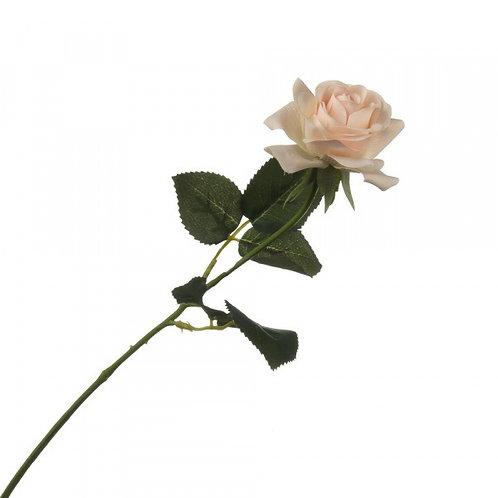 "Роза ""Розита"""