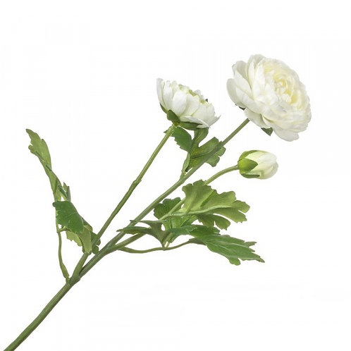 Ранункулюс белый