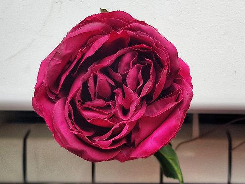 """Роза """"Марсала"""" пионовидная"""