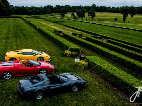 Two Prancing Horses and a Bull