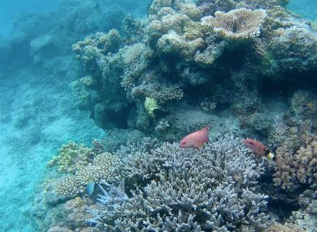 帰りの飛行機をキャンセルして延泊してしまう海がある。西表島