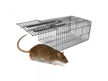 WHAT IS THE BEST HUMANE MOUSE TRAP?