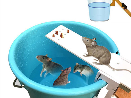 Mouse bucket device