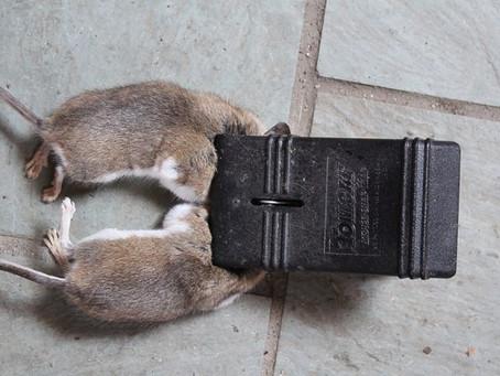 Most effective mousetrap