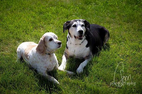 Bailey & Dexter