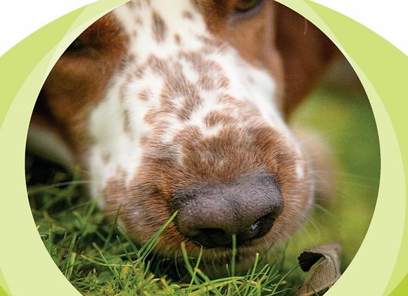 Livre broché: Mon chien à du nez !