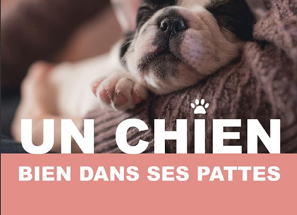 """Brochure numérique """"Les besoins de nos chiens"""""""
