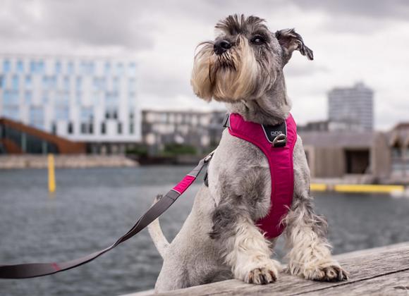 Harnais DogCopenhagen Comfort Walk Pro