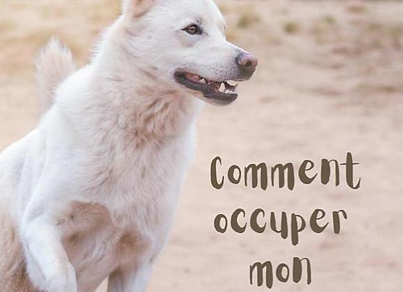 Livre broché: Comment occuper mon chien ?