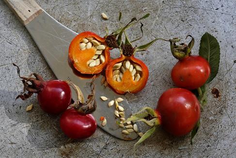 Food photography, rosehip Food photographer Christina Bull