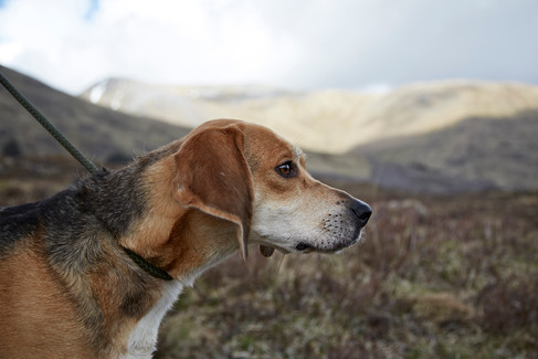 mens fashion, outdoors fashion, mountains, dog, scotland, Photographer Christina Bull