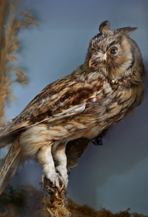 Taxidermy owl Interiors Hertfordshire Gothic - Interiors photographer Christina Bull