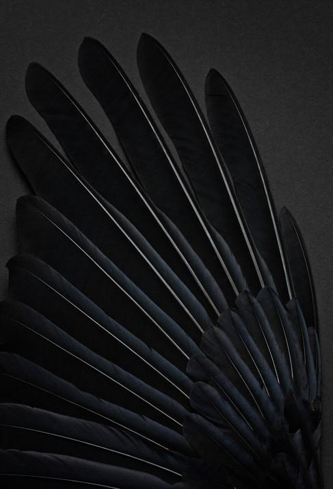 Still life feather
