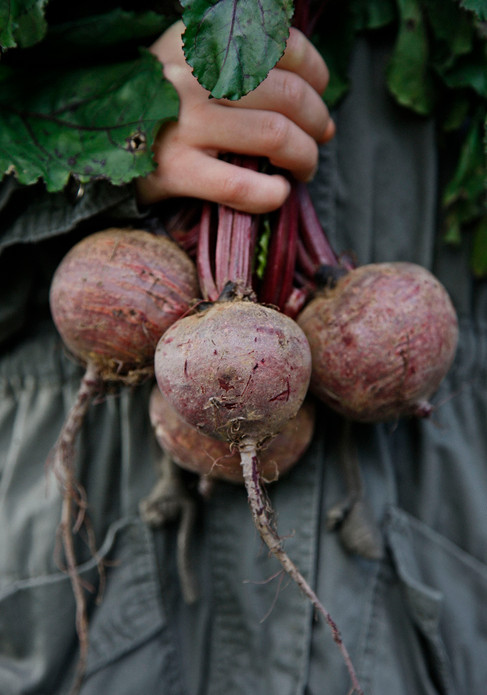 Food photography, beetroot, hands, Food photographer Christina Bull, Nordic Sugar