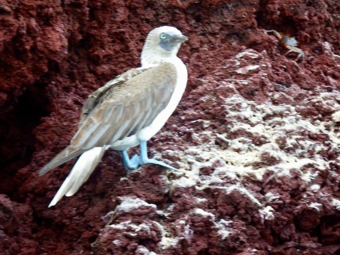 Close-up Birding