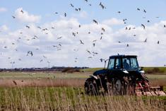 Landbrug i Soenderjylland