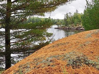 Granite Canadian Shield in fall