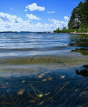 Underwater jewels, Big Sand Lake