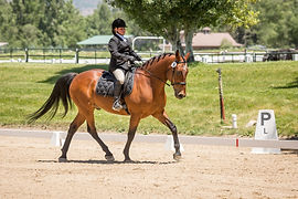 Horse Training, Eventing Grand Junction, Spirit Eventing